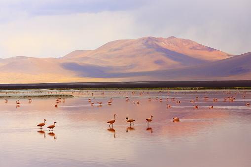 luoghi economici viaggi economici viaggio economico in bolivia offerte bolivia bolivia