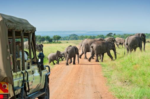 safari in africa costo andBeyond   safari in africa con bambini   safari in africa dove andare   safari in africa consigli   safari in africa quando andare   safari in africa quanto costa