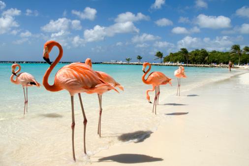 visitare Aruba destinazioni 2021 Aruba destinazioni 2021 Aruba dove andare a Aruba quando andare a Aruba