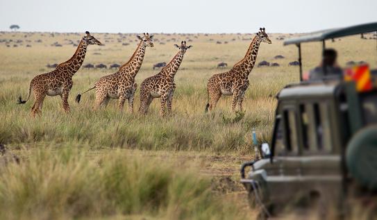 safari in africa costo   safari in africa con bambini   safari in africa dove andare   safari in africa consigli   safari in africa quando andare   safari in africa quanto costa  andBeyond