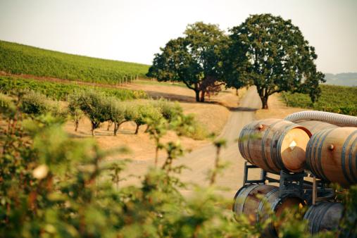 strada de vino val di noto autunno 2020